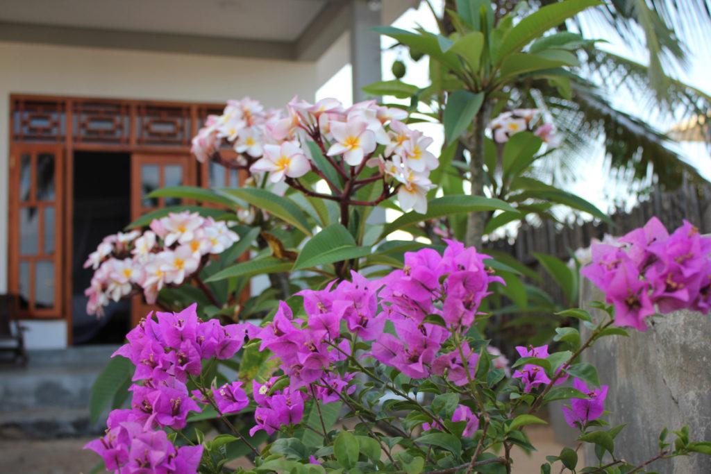 Stay Golden Homestay Garten